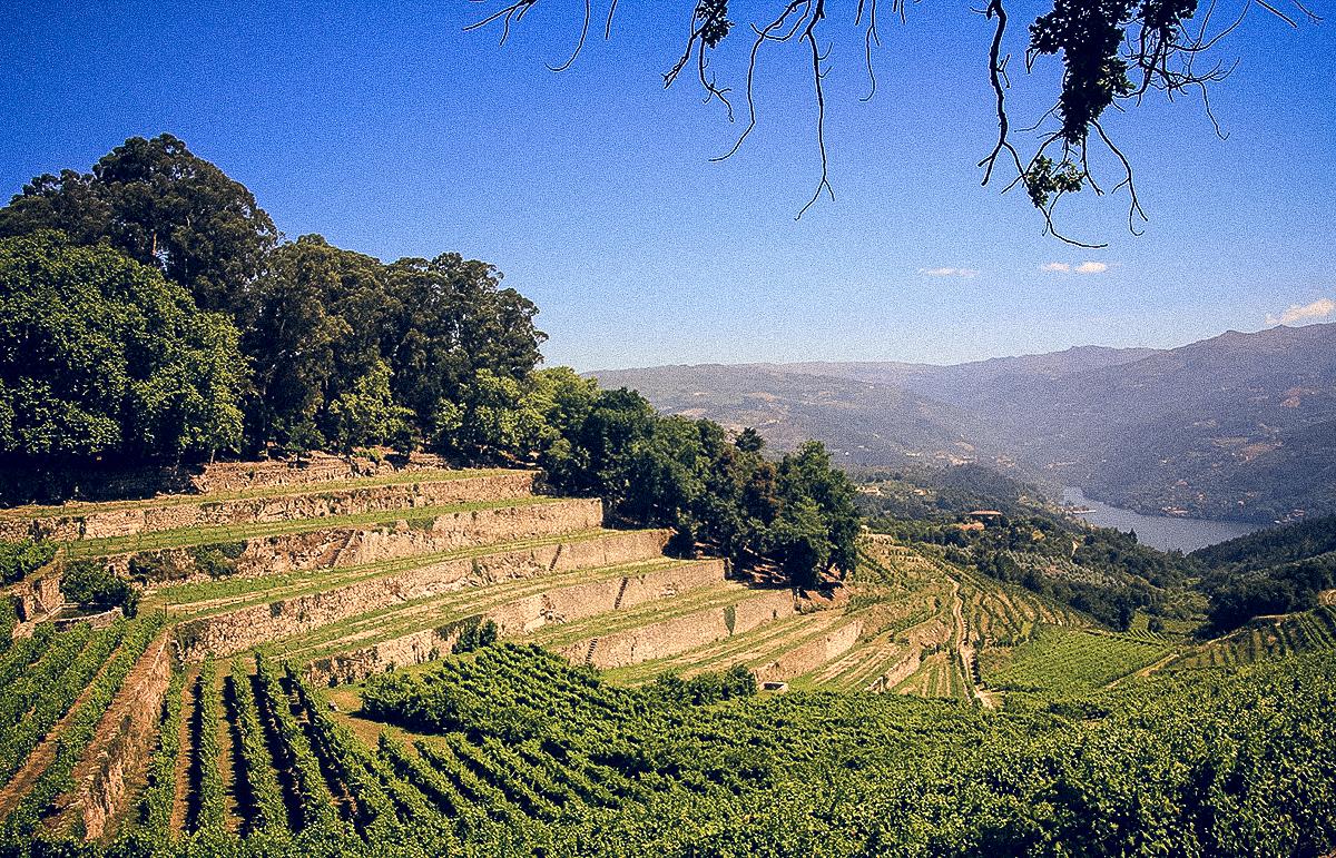 Manuel Costa e Filhos – Vinho Verde