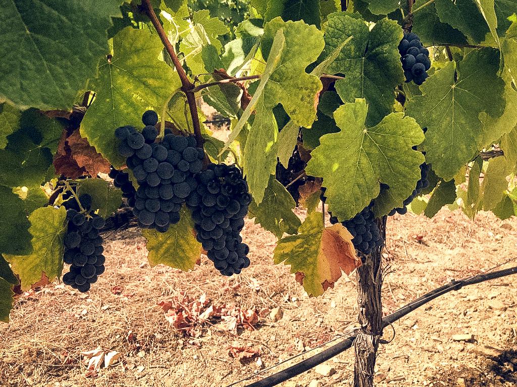 Weingut Quinta das Lamelas